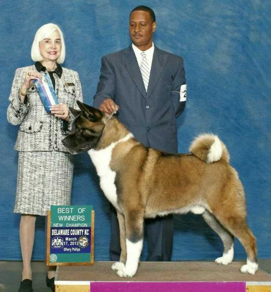 AKC CH Triumph The Real Thing At Monumental