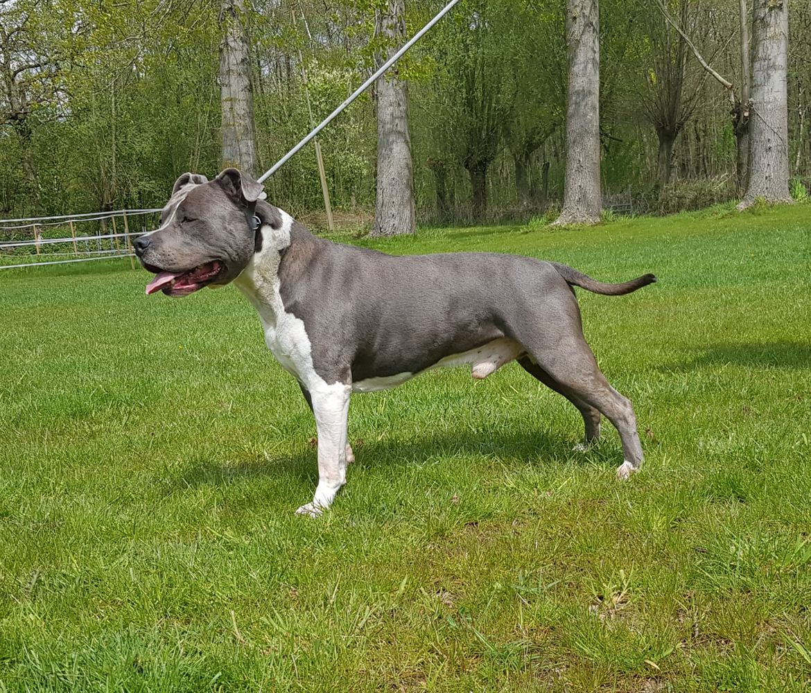 FROM GLADIATORDOGS SILVER BULLET