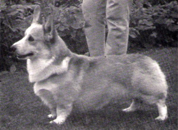 ENG CH Hildenmanor Crown Prince